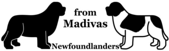 from-madivas-newfoundladers 350pxb